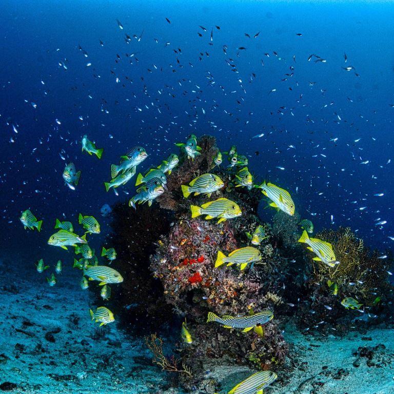 Tintswalo Boulders Underwater sea-life
