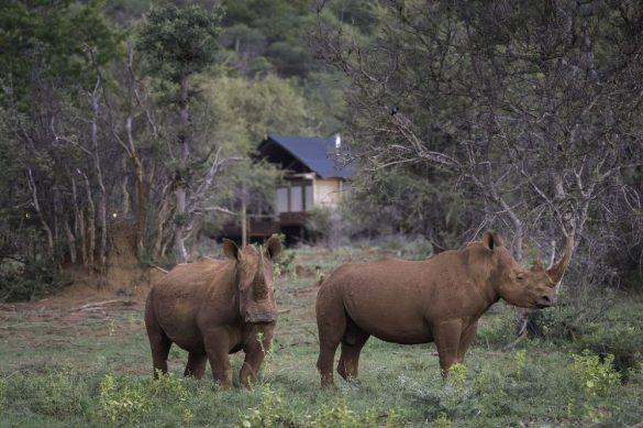 Tintswalo Rhino