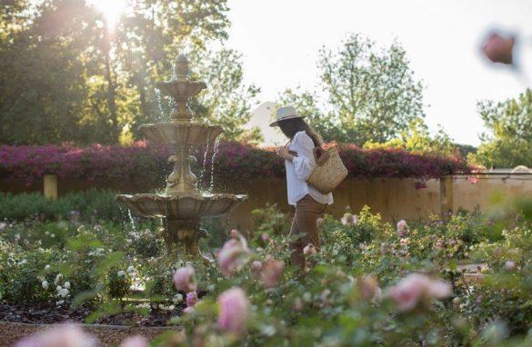 Vergelegen rose garden